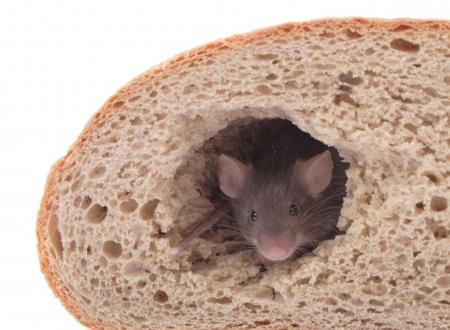 del mouse e la sua casa di pane isolato su sfondo bianco Archivio Fotografico
