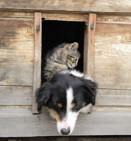 surprised dog: small cat and big dog and their nice wooden home  Stock Photo