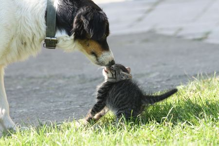 surprised dog: young cat and old dog are friends