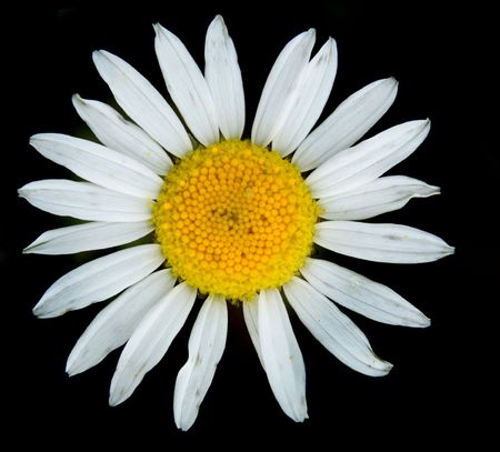 nice white flower isolated on the black background Stock Photo - 6378138
