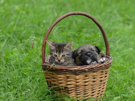 surprised dog: cat and dog in the basket (valentine day)