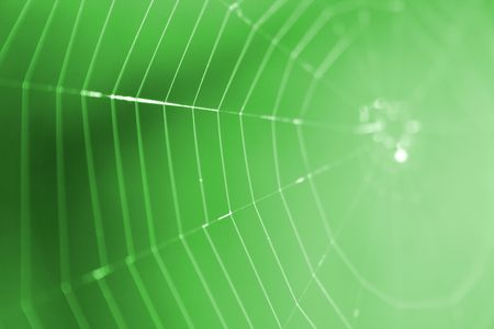 spider net: nice spider net from the spring forest