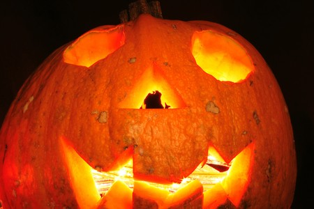 traditional halloween pumpkin as very nice  holiday background photo