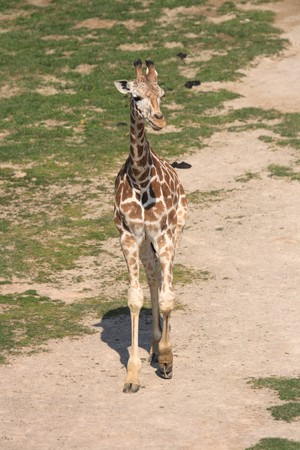 very nice giraffe from the wild nature Stock Photo - 7848660