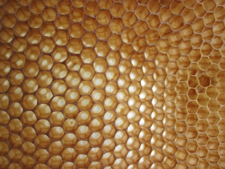 beeswax background without honey (empy honeycells) Stock Photo - 8613120