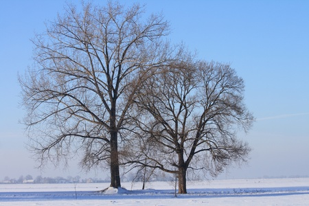winter country with the treeses from the czech republic photo