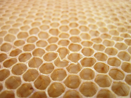 empty honey texture as nice bee background Stock Photo - 8727464
