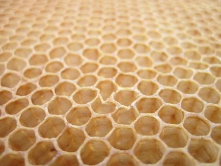 trama di miele vuoto come sfondo bello ape