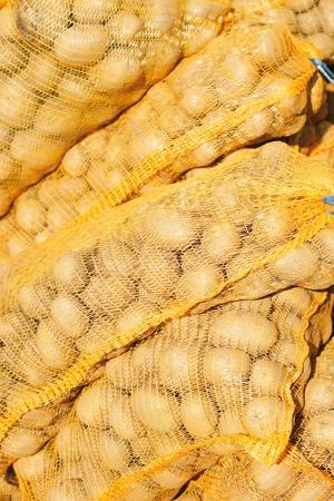 fingerling: original fresh czech potatoes from the farm