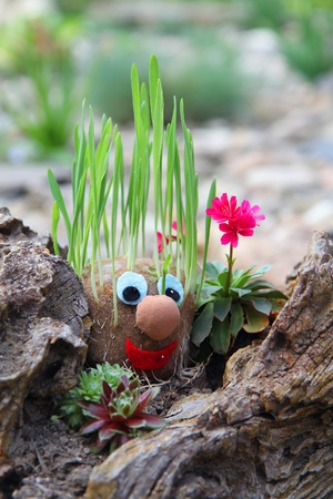 home made spring face with grass hair Stock Photo - 9568923