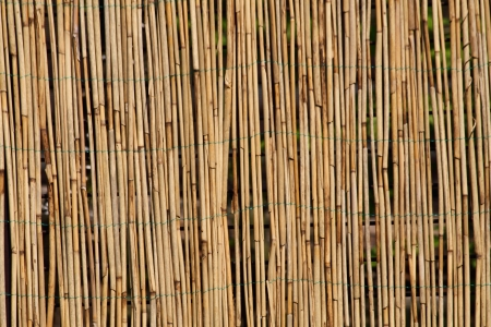 bamboo mat: bamboo background as very nice natural texture