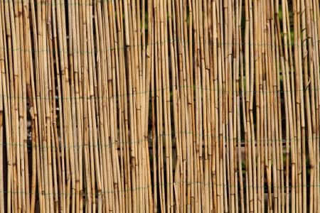 sfondo di bamb� come texture naturale molto piacevole  Archivio Fotografico
