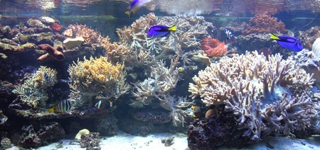 nice aquarium background with the exotic fishes photo