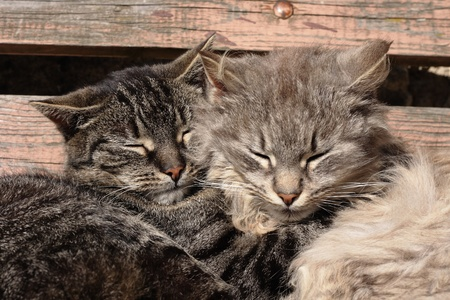 two cats are resting together as happy couple
