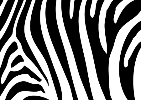 zebra background as very easy animal background Vector