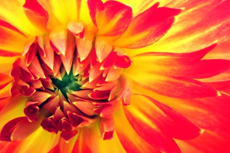 orange flower as very nice natural background Stock Photo - 10963829