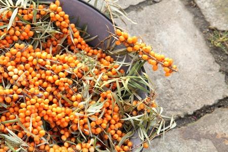 sea buckthorn as fresh orange exotic fruit  photo