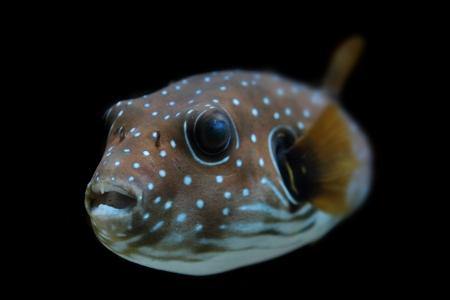 深い海から色のエキゾチックな魚