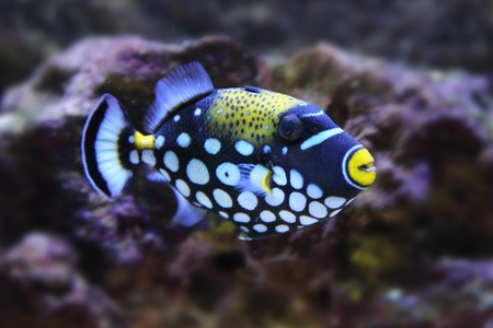 color exotic fish from the deep sea  Stock Photo