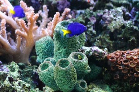 natural sea plants as nice aquarium background photo