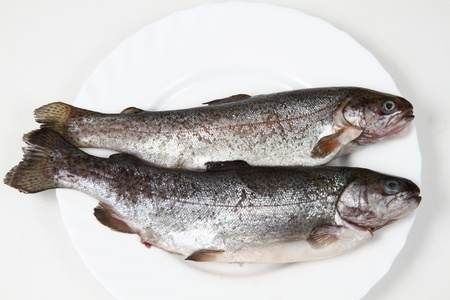 raw trout fishes isolated on the white background Stock Photo - 12894014