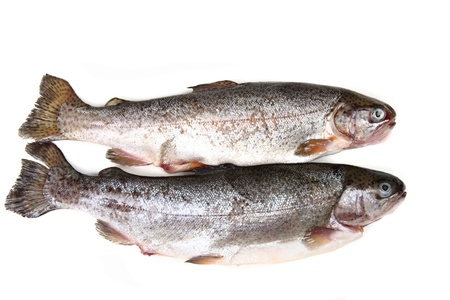 raw trout fishes isolated on the white background Stock Photo - 12894011