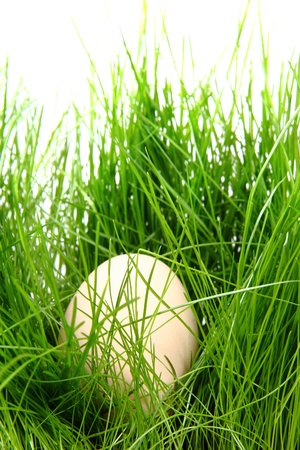 easter egg in the green spring grass  photo