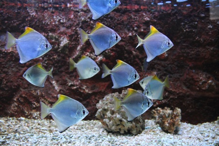 exotic sea fishes on the aquarium background photo
