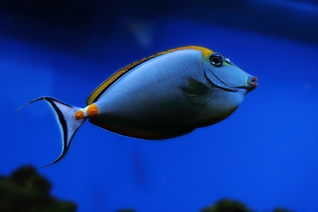 exotic sea fish on the aquarium background Stock Photo - 12893962