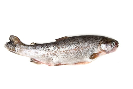 trout fish isolated on the white background photo