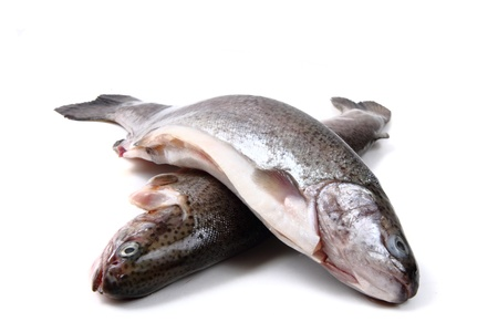 trout fishes isolated on the white background photo