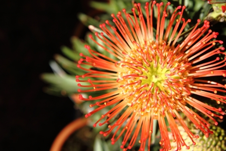 exotic flower: exotic flower as very nice natural background