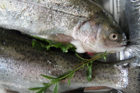 raw trout fish as very nice food background Stock Photo - 14844432
