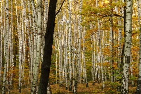 autumn forest as very nice natural background photo