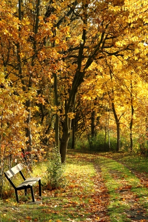 bench in the autumn park as nice natural background photo