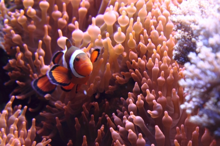 nemo fish as very nice natural background Stock Photo - 15677299