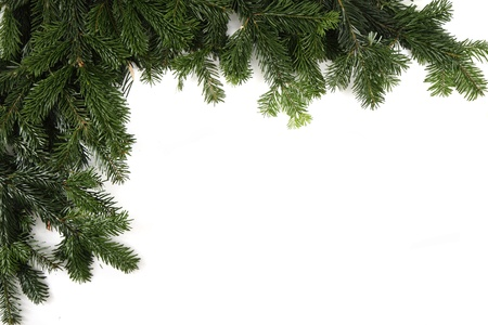 pine: christmas green texture isolated on the white background