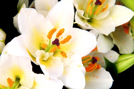 white flowers as very nice natural background Stock Photo - 17816094