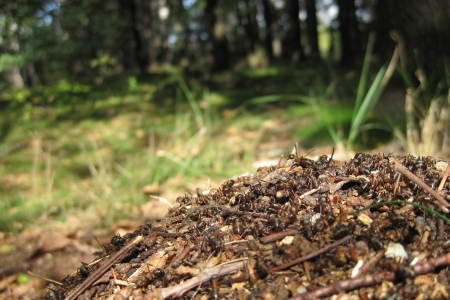 ant colony as very nice animal background photo