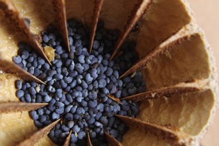 nice food: detail of poppy as nice food background Фото со стока
