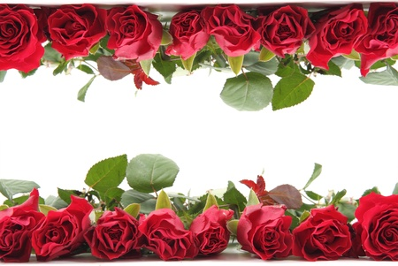 fresh red roses as frame isolated on the white background photo