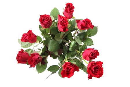 fresh red roses isolated on the white background