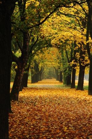 łatwy sposób, w parku jesienią romantycznym kolorze