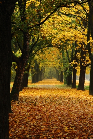 easy way in the park  romantic color autumn  photo