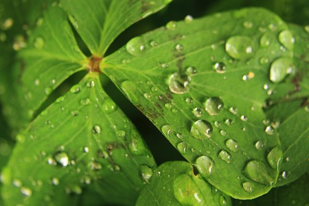 water drops on the green leaf as nice natural background photo
