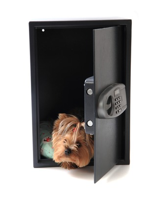 dog in the safe isolated on the white background photo