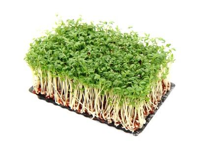 흰색 배경에 고립 된 신선한 녹색 watercreess