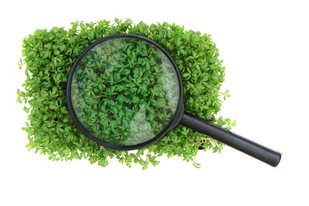 watercress and magnify glass isolated on the white background photo