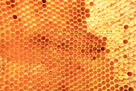 bee wax with fresh honey as nice natural background photo