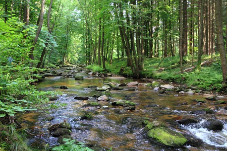 small river in the green forest from the spring photo